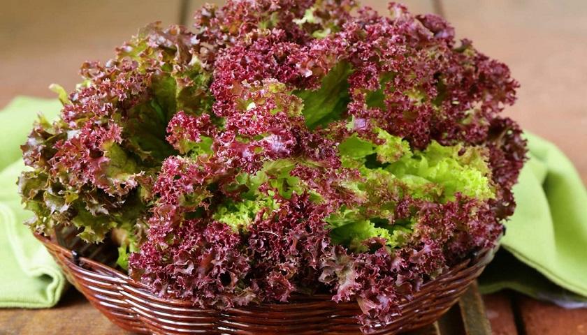 Сочный сезонный салат: его виды и применение в кулинарии